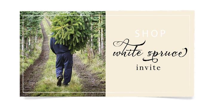 whitespruce2.jpg